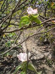 Vida llena de esperanza en los cerros de Jicamarca