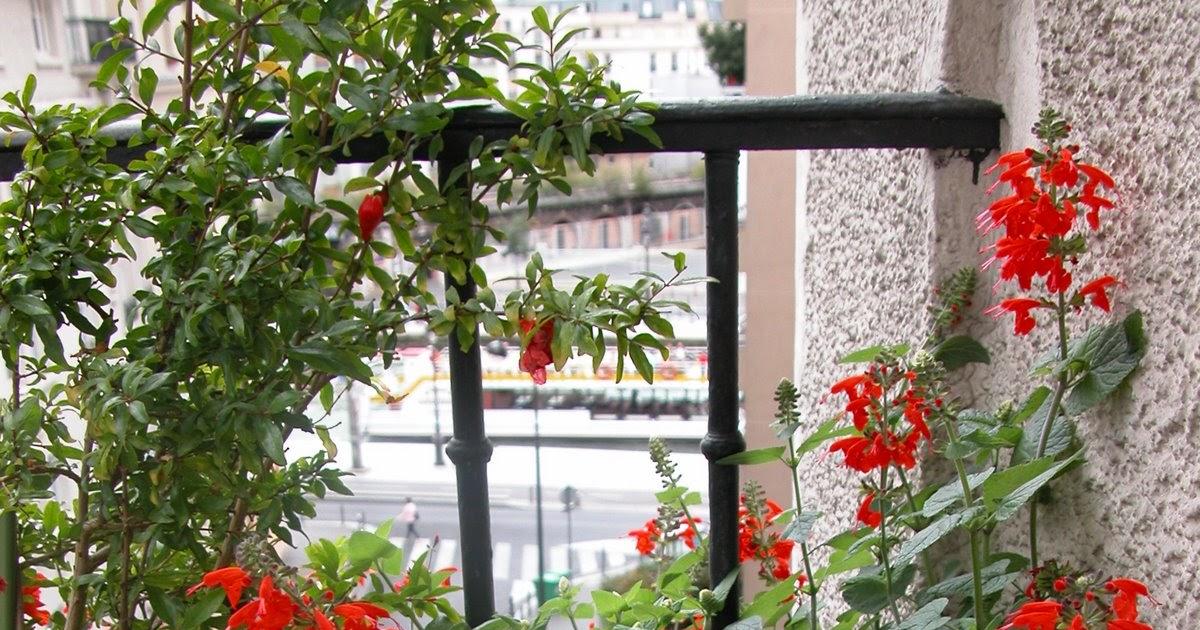 Paris c t jardin balcon en plein sud que planter - Planter hortensia plein soleil ...