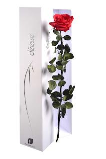 paris c t jardin rose eternelle pour la saint valentin