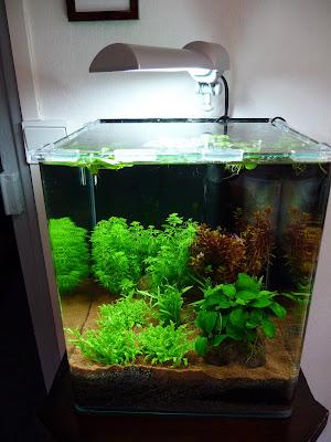 Paris c t jardin nouveau decor pour mon aquarium nano dennerle - Decoration pour aquarium ...