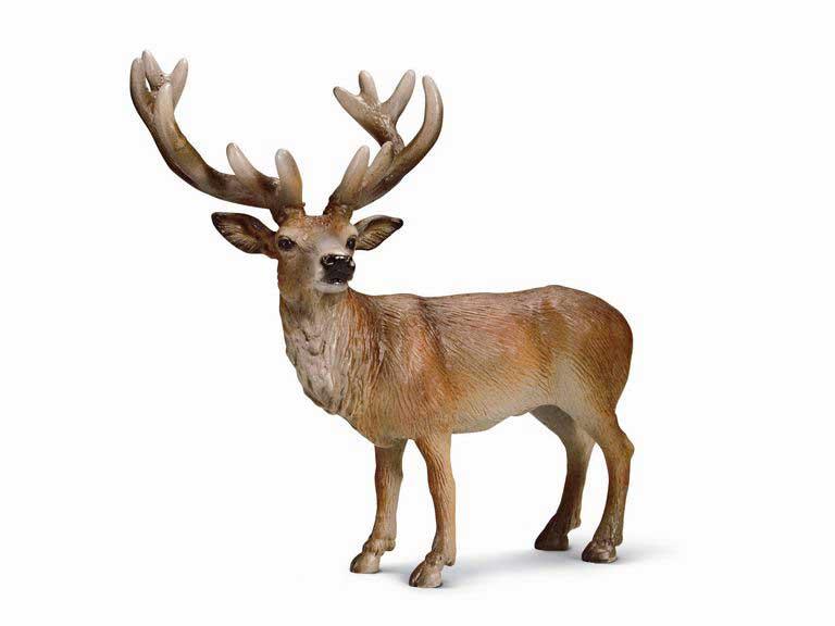 Image Gallery reno animal
