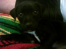 My baby boy Monroe...