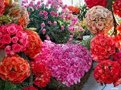 Toda Mulher Gosta De Rosas e Rosas e Rosas...