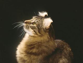 Astrovet il gatto e i suoi ritmi nella coabitazione con l - Come fare il bagno al gatto ...