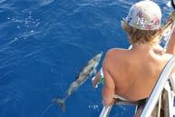 Dolfijnen op de Gambia rivier