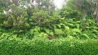 De Azoren zijn héél groen.