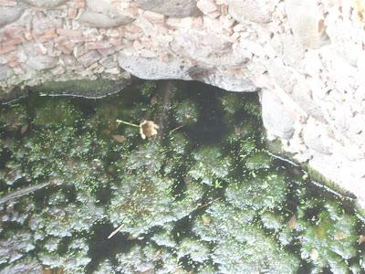 Visita al terreno de la noria con tunel y la aparición IMG_0198+%28Large%29