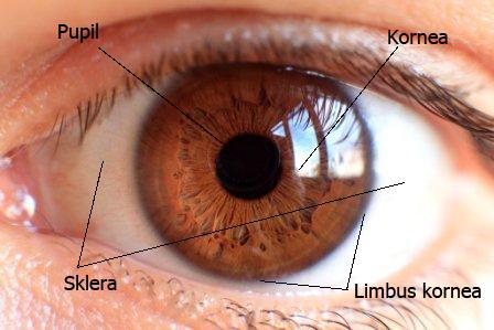 About Eye: STRUKTUR BOLA MATA - SKLERA