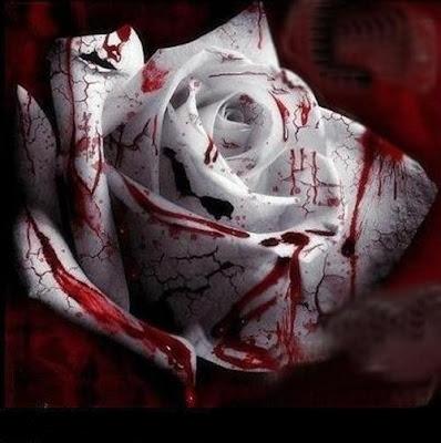 rosa_di_sangue.jpg