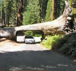 pohon terowongan