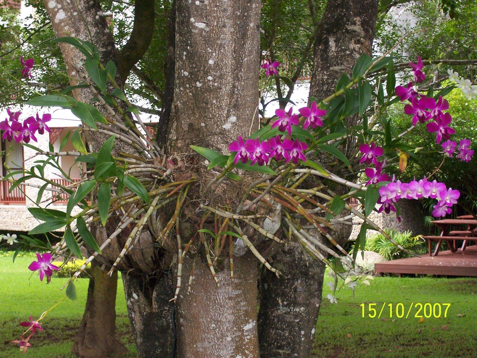 Decora j a beleza das orqu deas for Cuidado de las orquideas moradas
