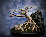 Seni Bonsai Indonesia