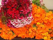 Flores en el Mercado Bonpland