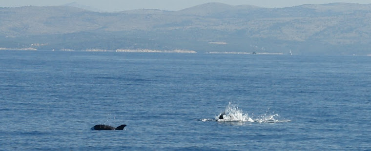 Dolphins in front of the villa