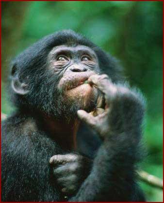 http://1.bp.blogspot.com/_K9B5jVg0Wzc/TVE2v0j2L7I/AAAAAAAAALM/gRJ5AwLwKcg/s1600/duvida-cruel-02.jpg