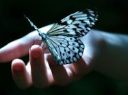 Gentle Butterfly