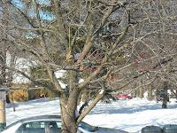 DIY Pine cone bird feeders