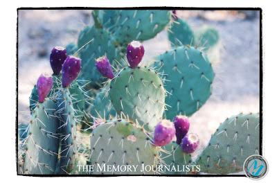 Arizona Travel Photos 7