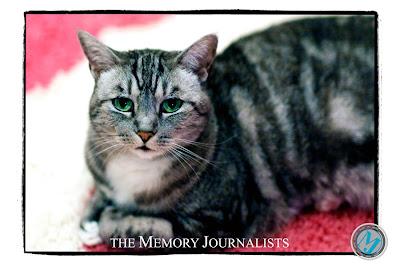 Sacramento Pet Photographers