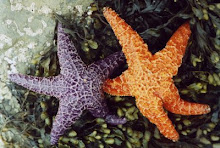 Starfishes Become Friends