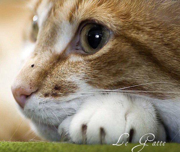 Le Gatte Si Sono Arrabiate I Gatti Pensano