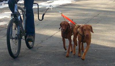 Redbirddog A Hungarian Pointer Vizsla Blog Roading Safely