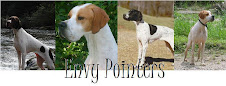 Envy Pointers Home