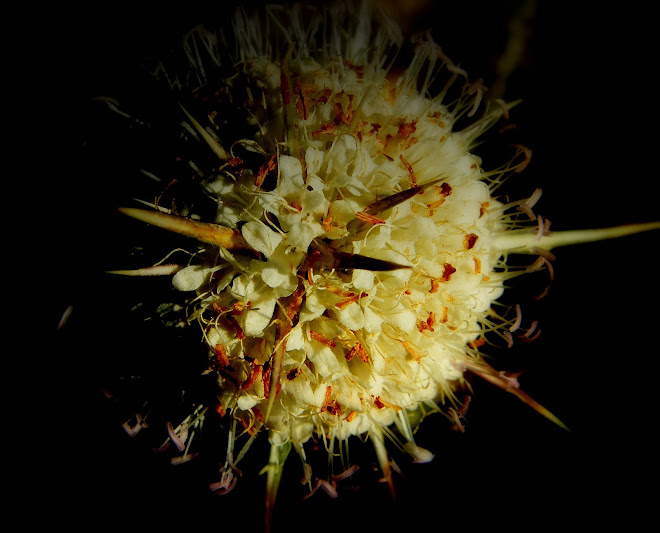 fiore e spine