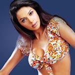 Mallika Sherawat Hot Bikini Images