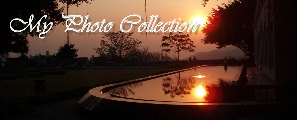My Photo Collection
