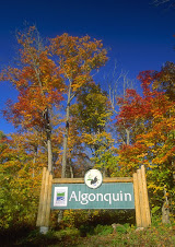 ENTRANCE TO ALGONQUIN PARK IN THE FALL,