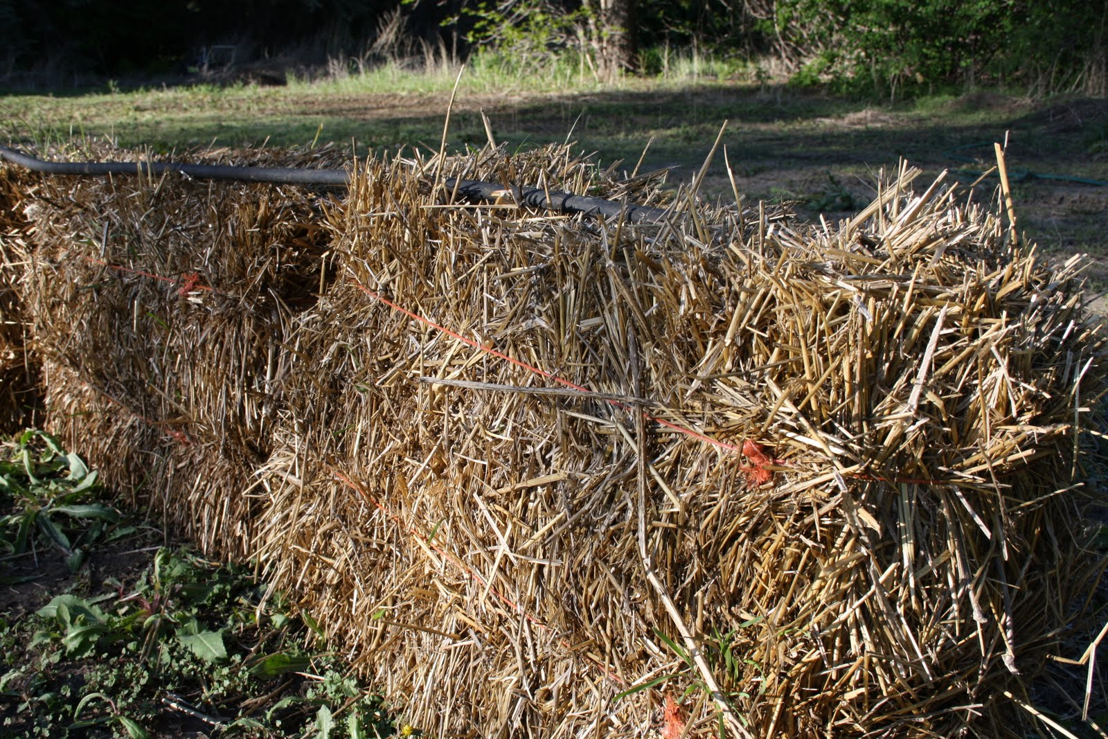 Mission Kim Possible My Attempt At Straw Bale Gardening