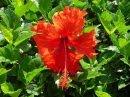COZUMEL FLOWER!