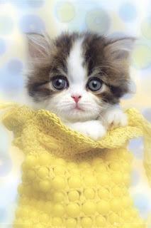 http://1.bp.blogspot.com/_KHRBfgSxME8/S74_q1e5LDI/AAAAAAAAAC0/cPs722aTkiQ/s1600/cute-cat-f.jpg