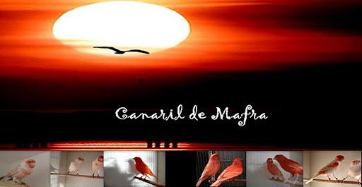 CANARIL DE MAFRA.JM