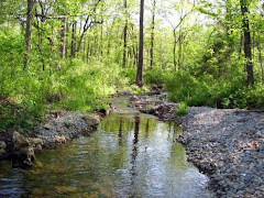 Michael's Creek