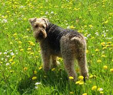 Mein süßes Hundemädchen