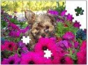 Puzzling LuLu