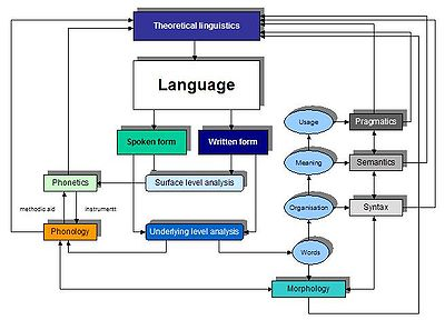 relationship semantic and phonology