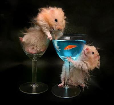 hamster photo art