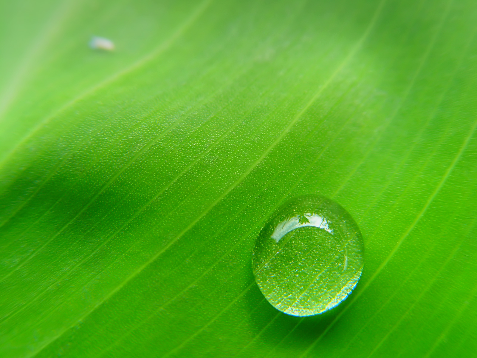 green leaves water drops wallpapers pixhome