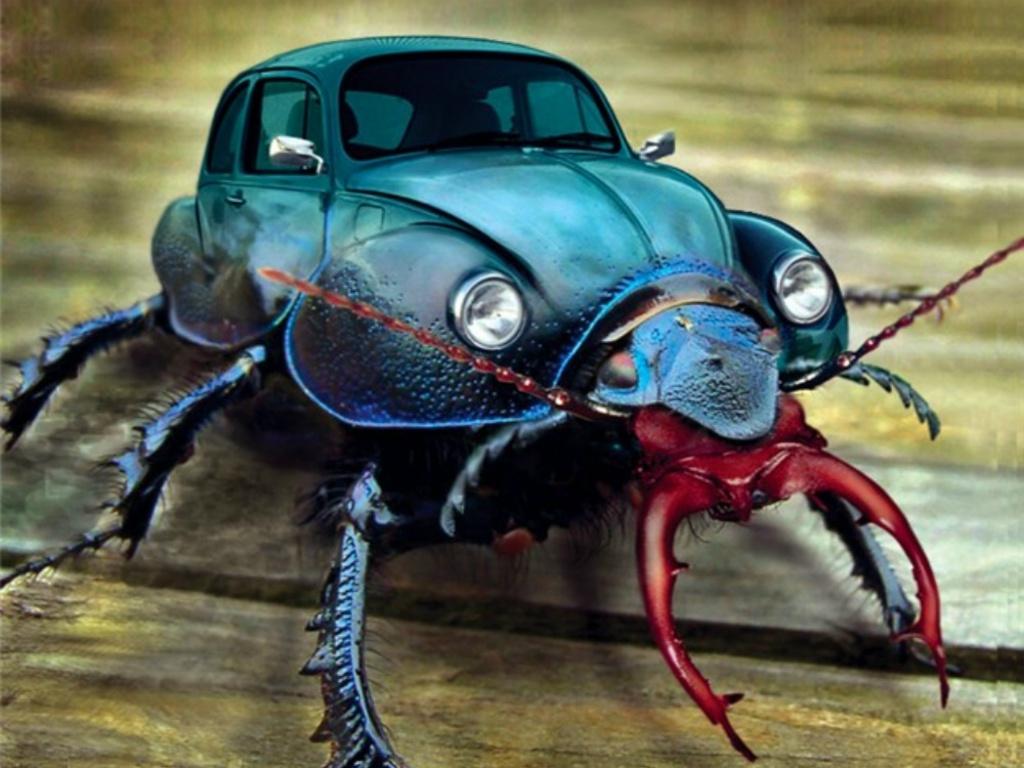 http://1.bp.blogspot.com/_KLJU3hHDGVM/TDhyChGEEdI/AAAAAAAAC7I/ar4o5F5WV9s/s1600/Real-Beetle-Bug.JPG