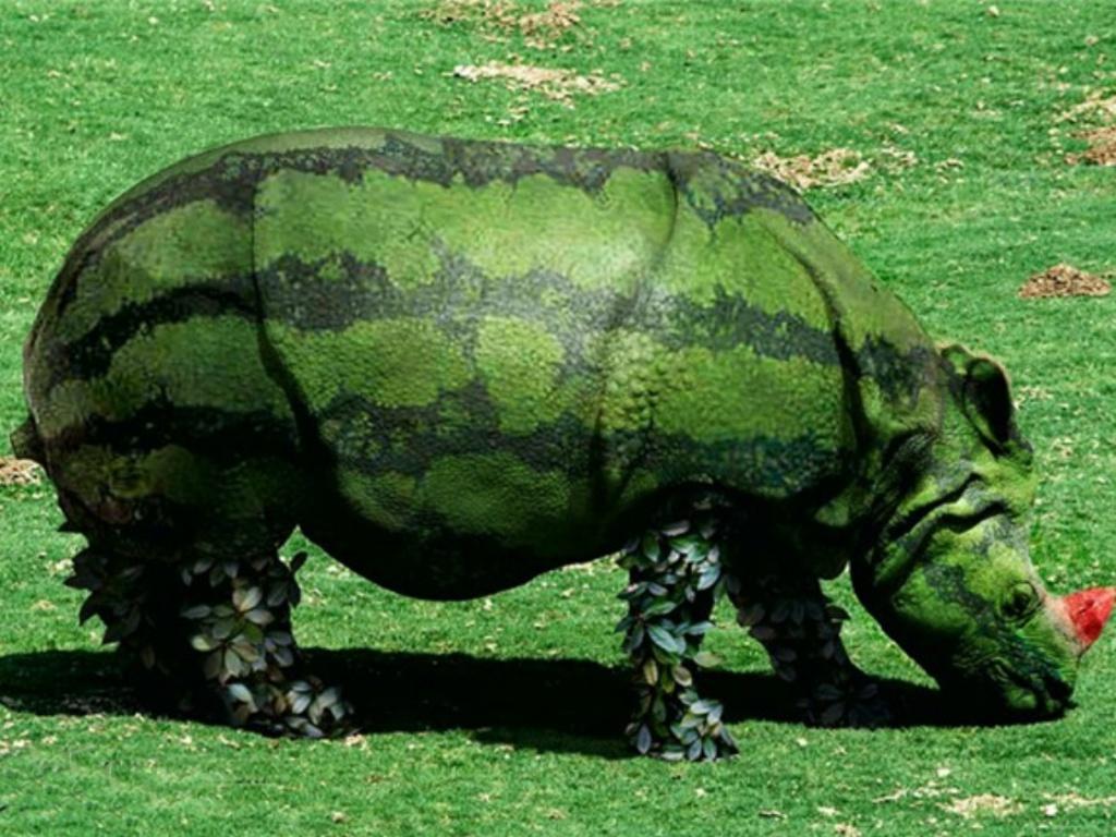 http://1.bp.blogspot.com/_KLJU3hHDGVM/TDhyr5uLNJI/AAAAAAAAC8A/rfL99pbf19s/s1600/Watermelon-Rhino_Creative_Pictures.JPG