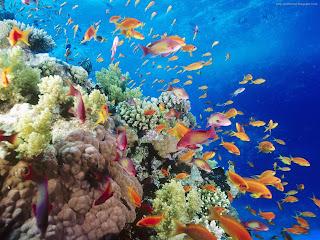 colorful sea fish picture