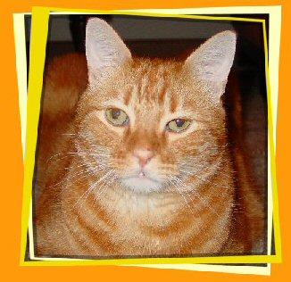 zaphod in orange photo