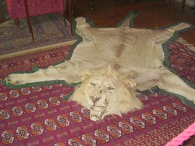 Pelo ou couro de leão representando o homem divorciado.