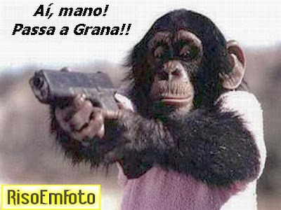 Macaco chimpanzé aponta arma como assaltante.