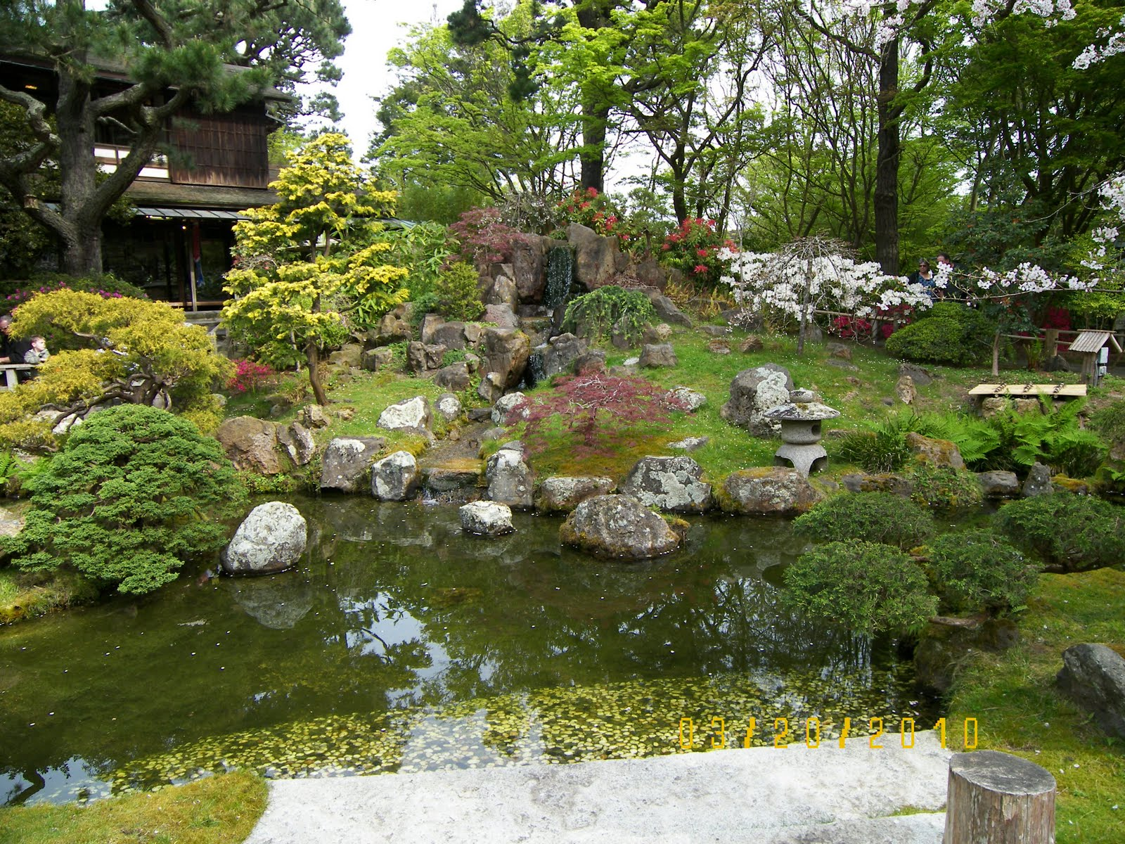My koi pond 2010 visited sf japanese garden for Japanese garden with koi pond