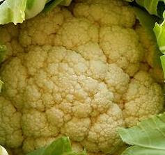 Best cauliflower