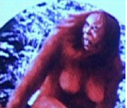http://1.bp.blogspot.com/_KOh9FfC89ac/TMKu5EuUFsI/AAAAAAAAC98/3cxfRPPx1Tc/s320/monyet.JPG